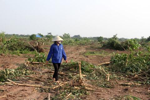 Cưỡng chế đất ở Văn Giang