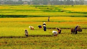 Thủ tướng Nguyễn Tấn Dũng: Lấy đất lúa phải được Thủ tướng cho phép