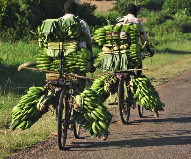 Căng thẳng Scarborough đã khiến nông dân và ngành công nghiệp xuất khẩu nông sản Philippines điêu đứng vì những biện pháp hạn chế (thực tế là cấm) nhập khẩu của Trung Quốc. Một tổ chức trọng tài quốc tế đứng ra giải quyết là điều cần thiết trong những vụ dùng thủ đoạn thương mại gây sức ép chính trị như thế này