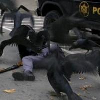 """""""Bầu"""" Kiên bị bắt và bầy quạ đen"""