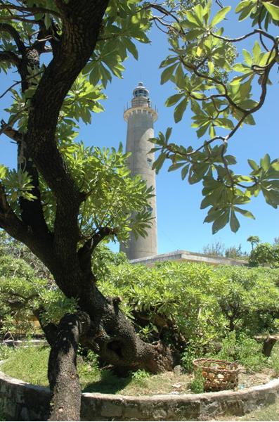 Cây phong ba trên đảo Song Tử Tây ( ảnh BienDong.Net )
