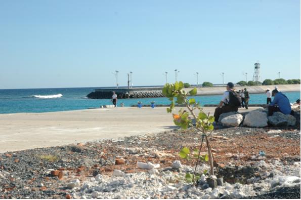 Mầm xanh trên nền đá san hô ở Trường Sa ( ảnh BienDong.Net )