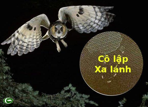 """Câu chuyện chim Cú và """"lười bò"""" Trung Quốc."""