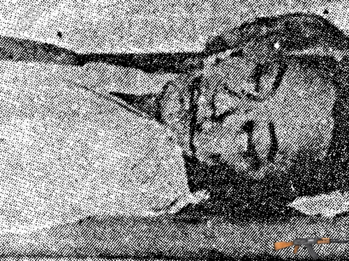 Phạm Ngọc Thảo bị sát hại - Ảnh: Tư Liệu